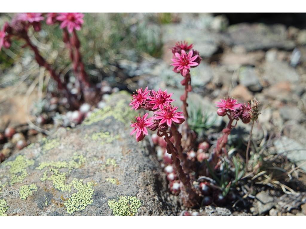 A pied, les plus beaux paysages de la vallée d'Izoard -6003cf3fb21b5: /
