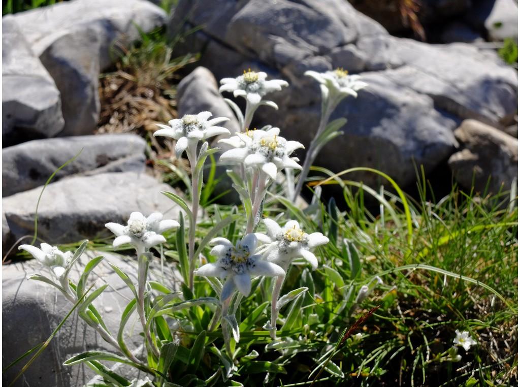 Echappée belle en randonnée autour de l'Izoard -5ed194a4454ad: /
