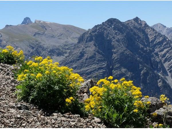 Découverte des sentiers d'altitude du Queyras au Piémont -5f32e3568963a: /