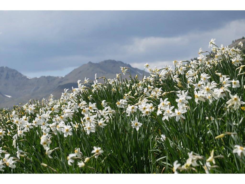 Randonnée itinérante sur les chemins d'Izoard : /