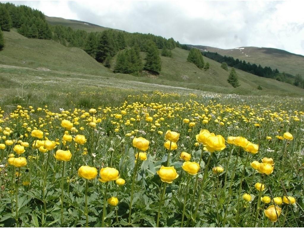 Randonnée itinérante sur les chemins d'Izoard -5f8bb19e6ba9f: /