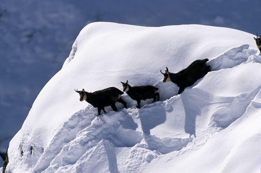 Découverte Du Pays d'Izoard à raquettes et ski nordique -6037aa827baca: /